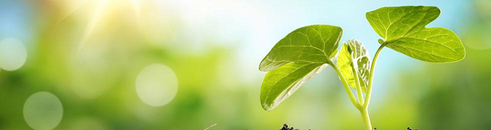 Ecogeo - Ambiente